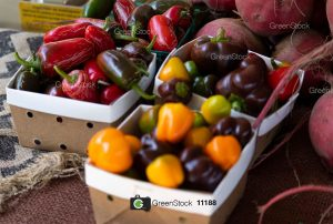 Green Stock Pro – Professional Stock Image and Video