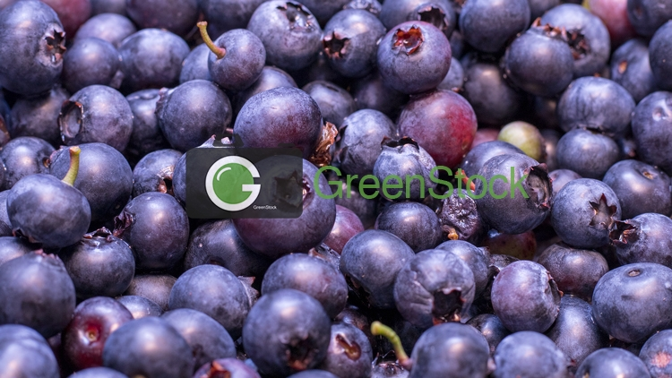 Fresh blueberries5