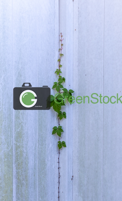 Vine growing