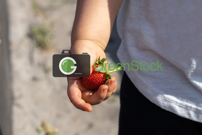 Toddler holding a strawberry